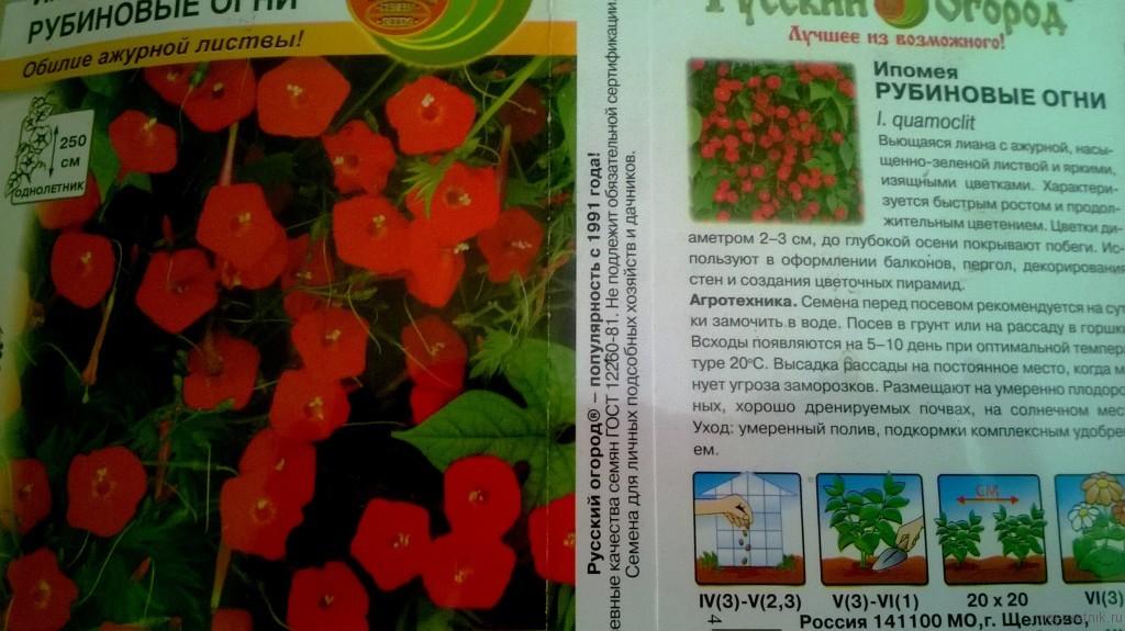 Кобея лазающая: посадка, особенности выращивания в домашних условиях и в открытом грунте, уход, фото - sadovnikam.ru