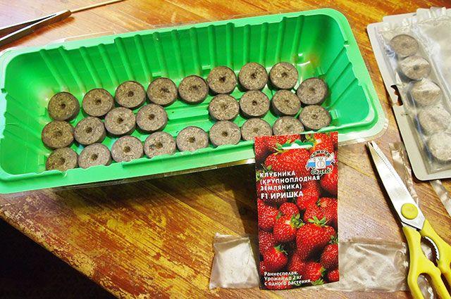 Выращивание клубники из семян, в том числе посадка, как ухаживать за всходами, видео по теме