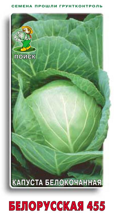 Капуста белорусская: фото, описание сорта, выращивание, отзывы
