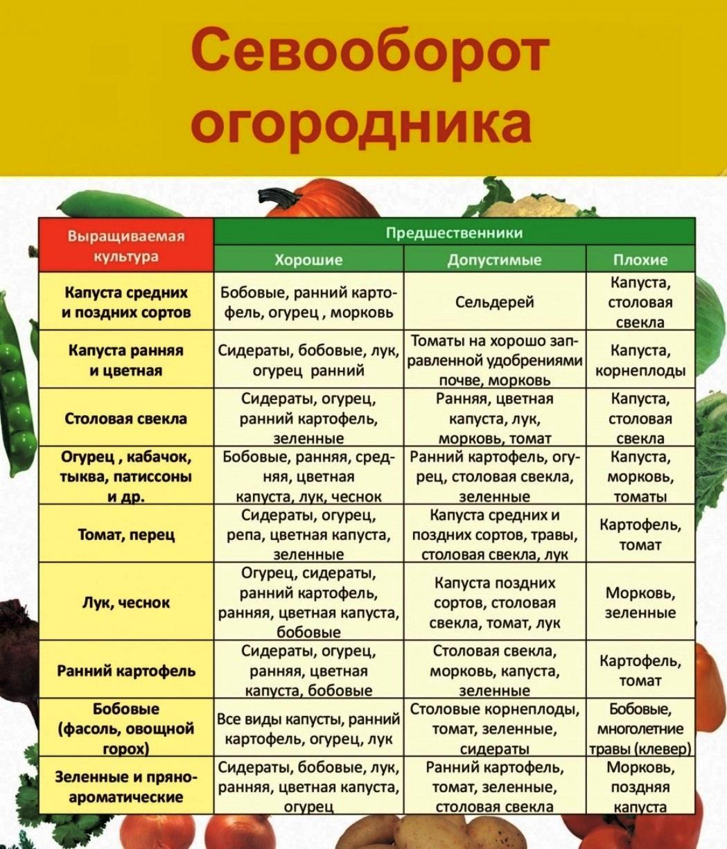 Что посадить после чеснока: полезные рекомендации для огородников