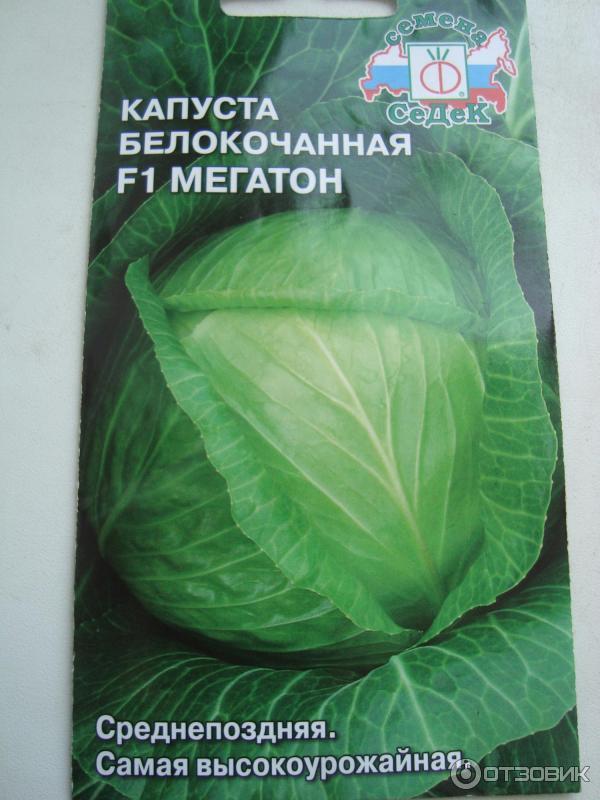 Какой сорт капусты лучше? узнаем преимущества и недостатки