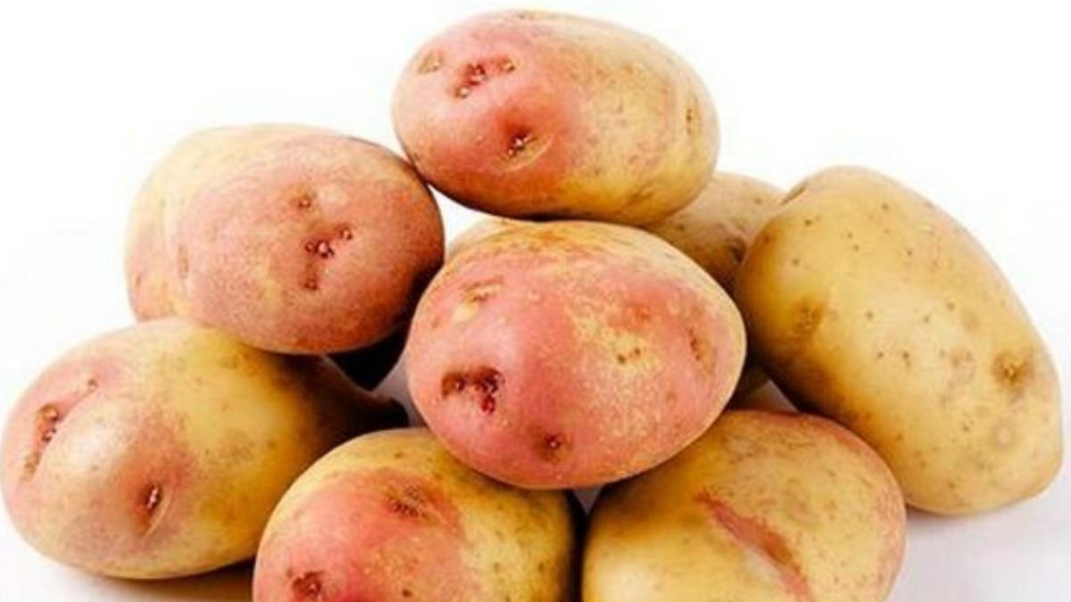 Картофель иван да марья — описание сорта с фото, посадка и уход
