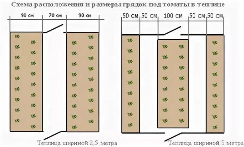 Схема посадки томатов в теплице 3х6: как расположить и сколько с фото и видео