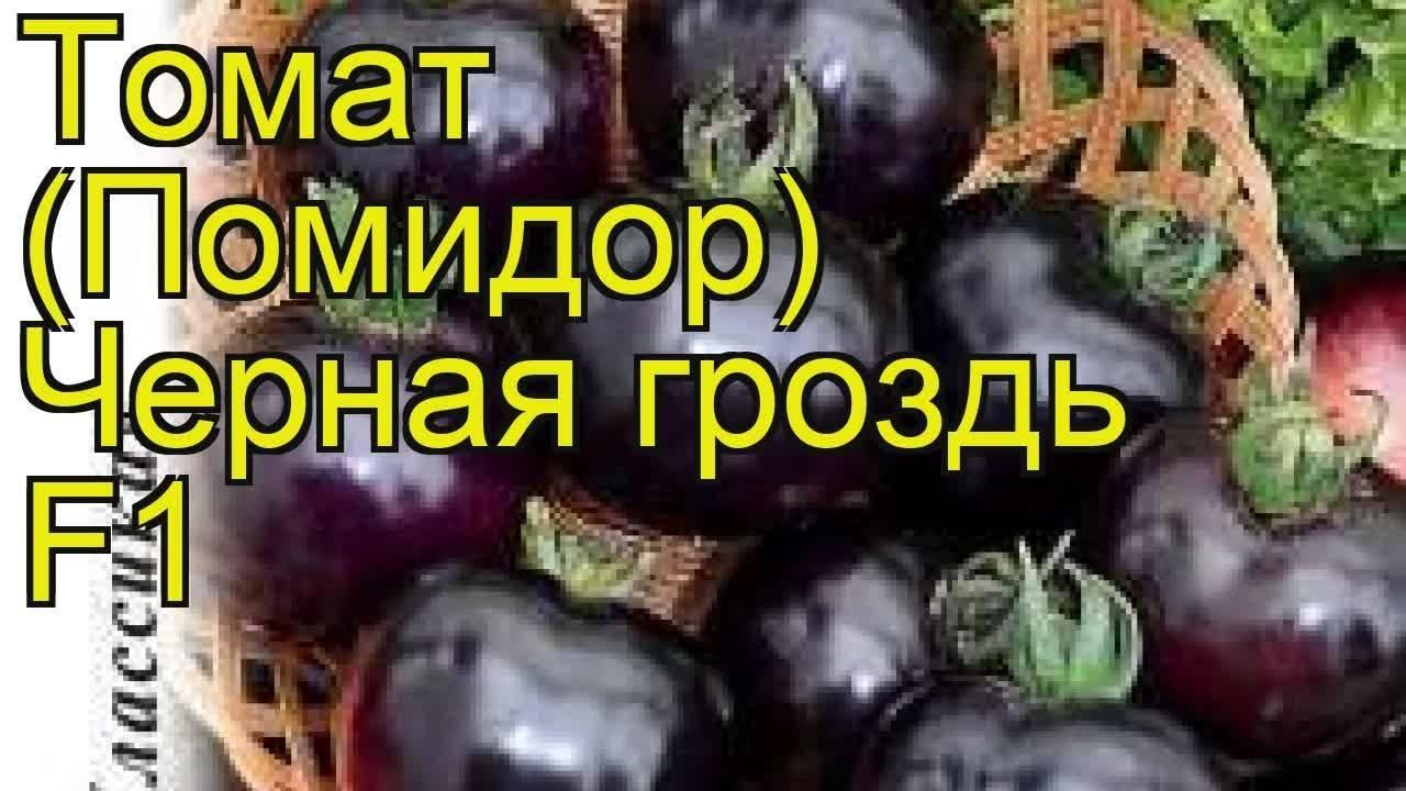 Томат бурая гроздь