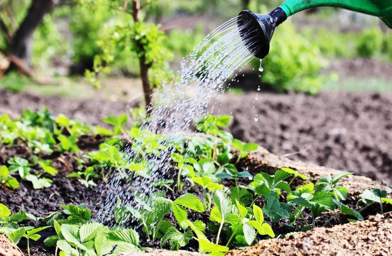 Чем подкормить сливу осенью после сбора урожая в августе и сентябре подкормки сливы весной чтобы плодоносила
