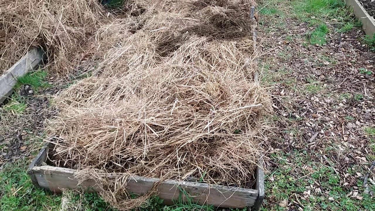 Выращивание картофеля под соломой или сеном: технология посадки, уход, отзывы
