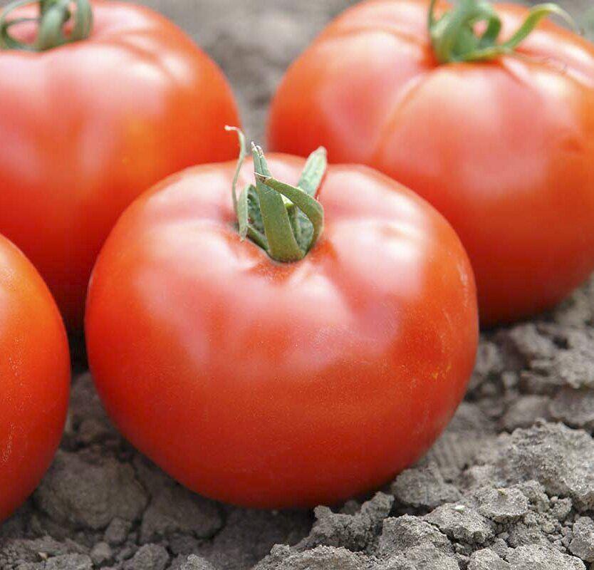 Томат американский ребристый: описание сорта, отзывы, фото, урожайность | tomatland.ru