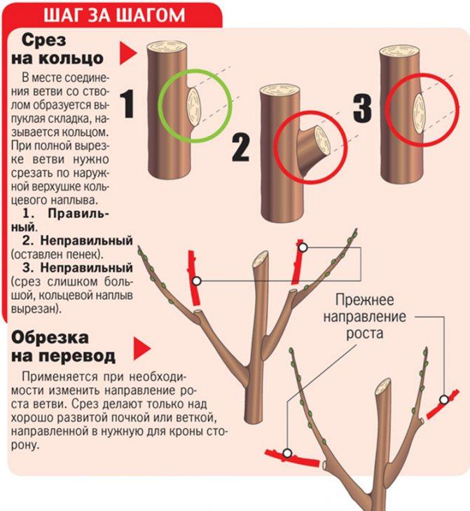 ✅ о размножении яблони из ветки и черенкованием в домашних условиях, грунте - tehnomir32.ru