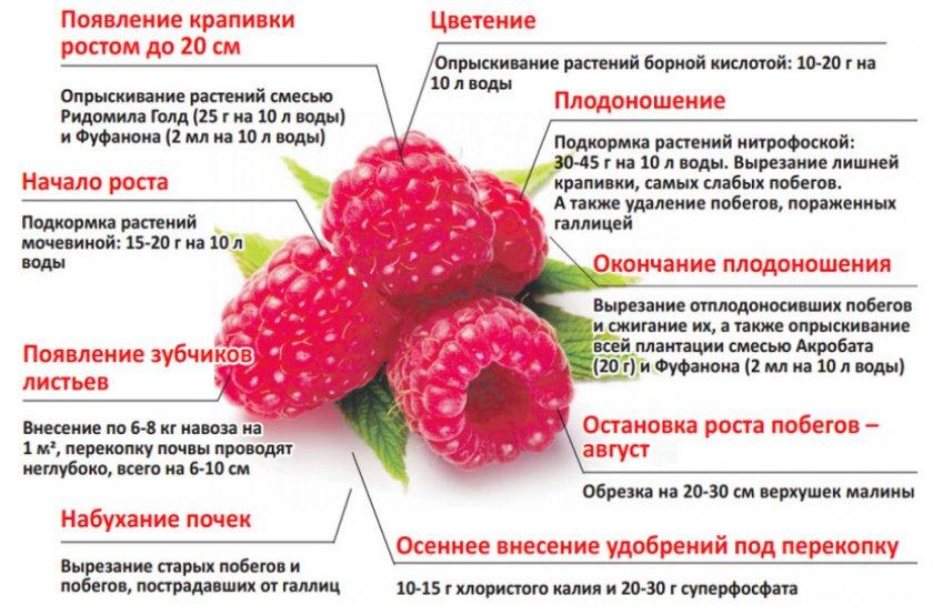 Клубника кент — описание сорта, фото, отзывы садоводов