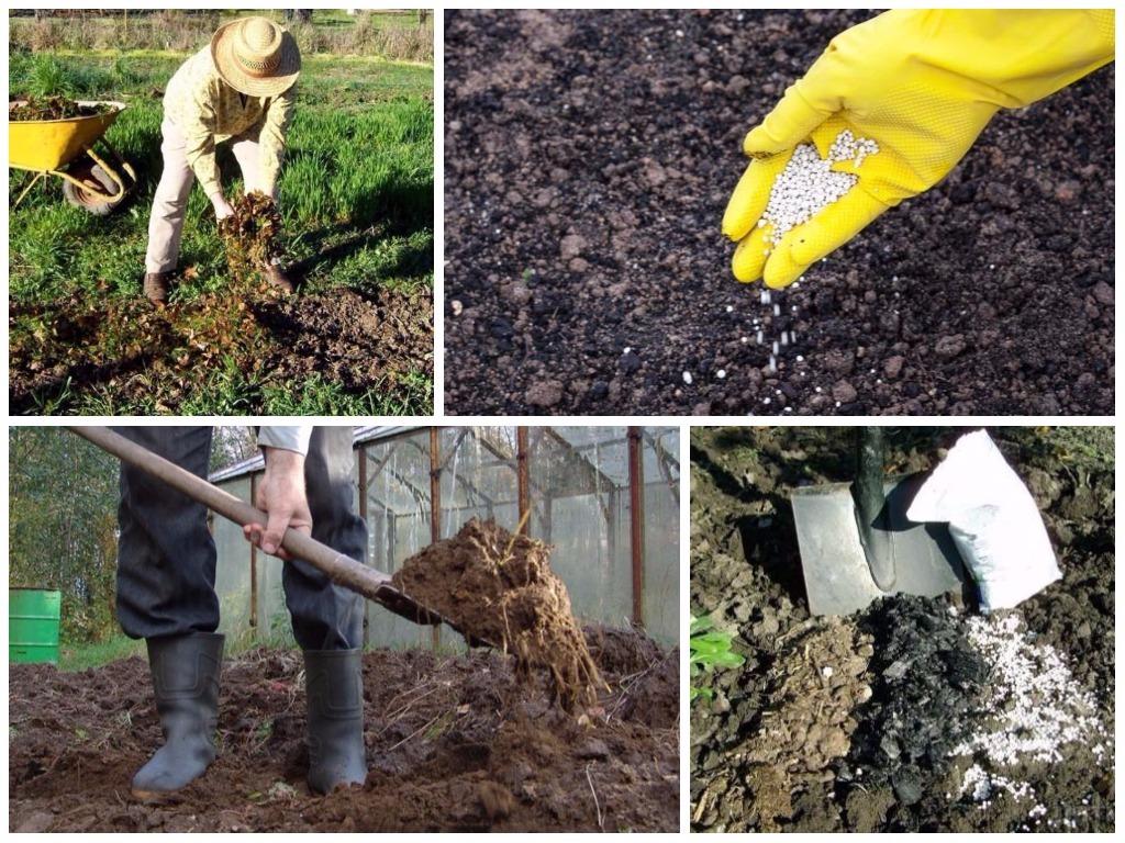 Чем подкормить грушу весной: виды комплексных удобрений