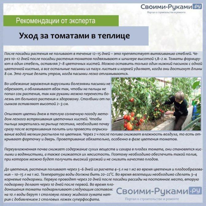 Особенности выращивания сладкого перца | cельхозпортал
