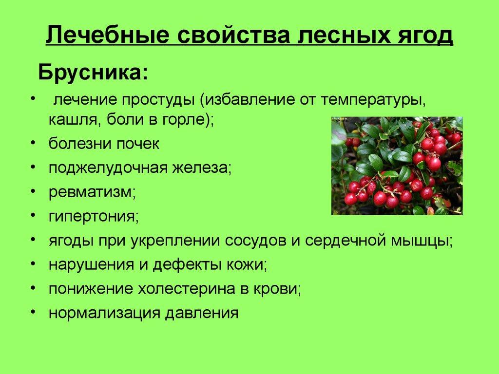 Брусника - полезные и опасные свойства брусники