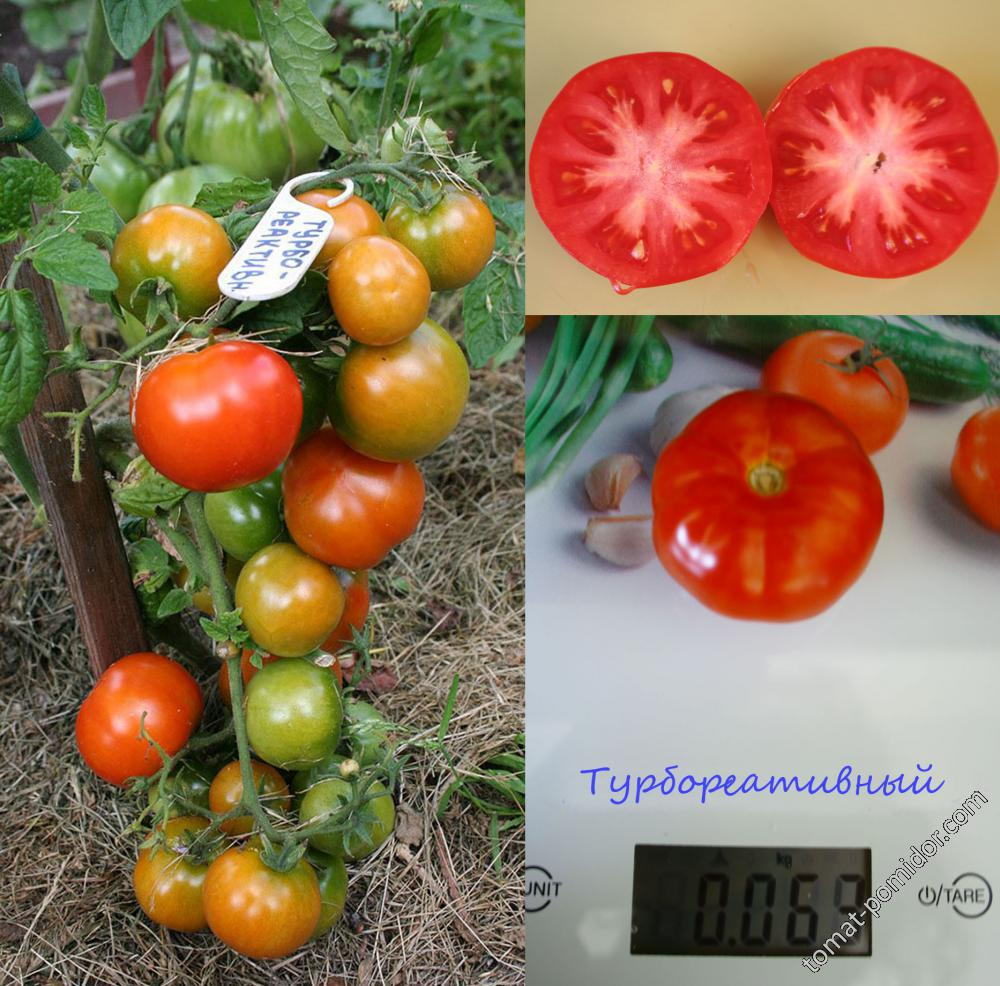 Описание томата Турбореактивный, рекомендации по выращиванию