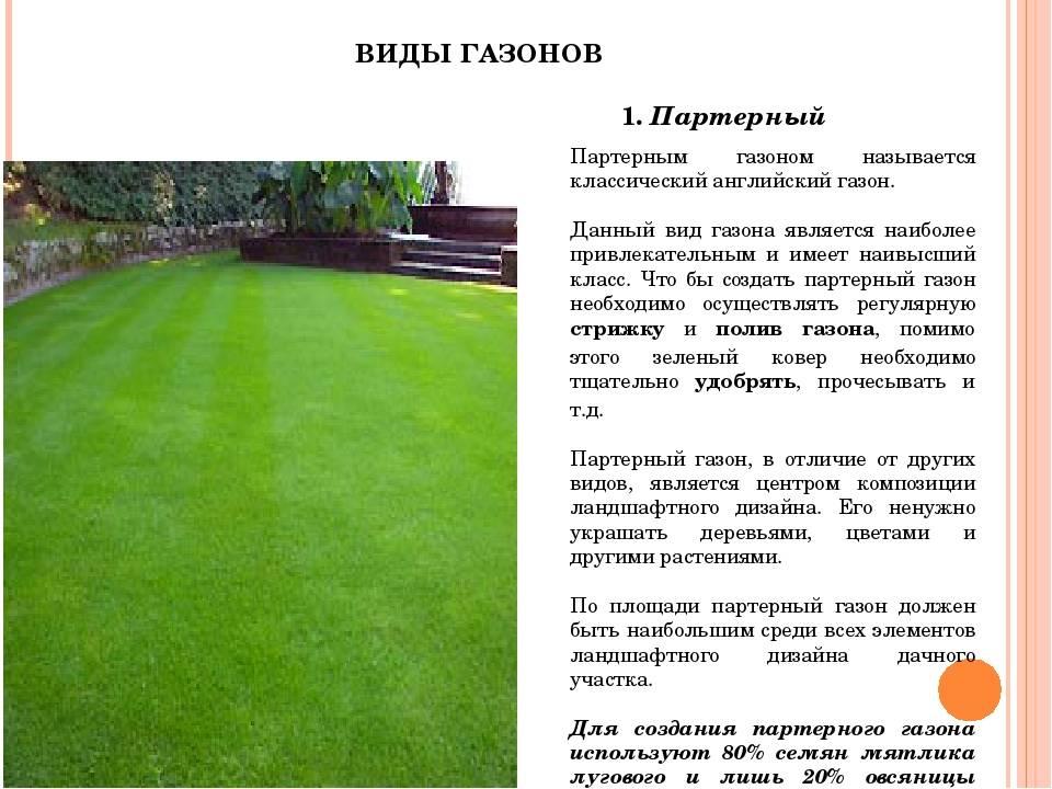 Разновидности овсяницы для газона, описание и фото
