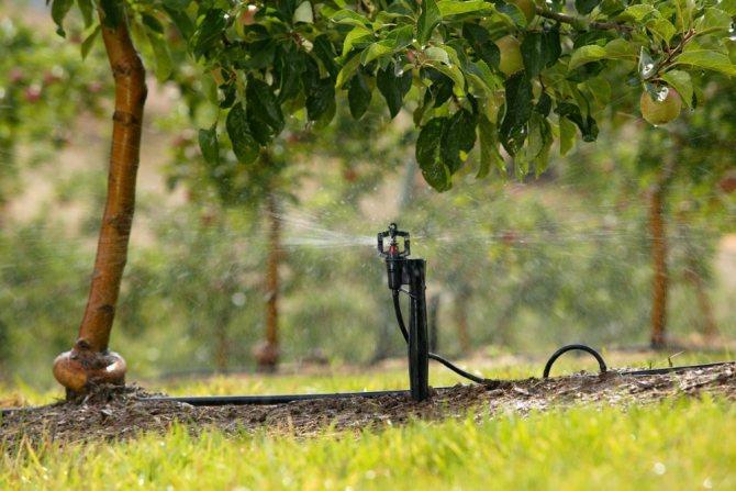 Как поливать яблони весной: норма и график, видео и фото