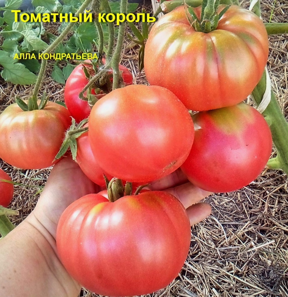Томат бугай розовый: отзывы, фото, урожайность, описание и характеристика