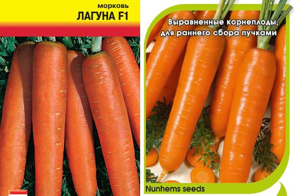 Морковь голландская: особенности этой селекции, описание сортов и нюансы выращивания русский фермер