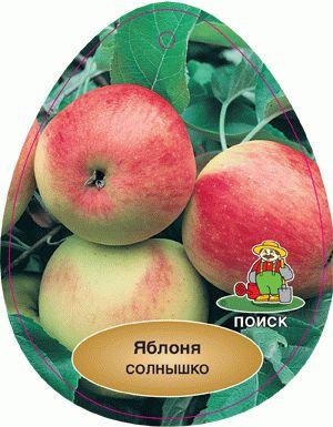 Яблоня сорта солнышко: описание и характеристики