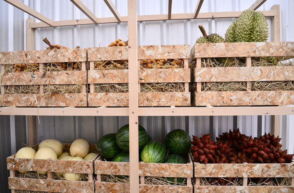 Как хранить яблоки в погребе на зиму: можно ли и как правильно организовать хранение урожая в подвале, при какой температуре?