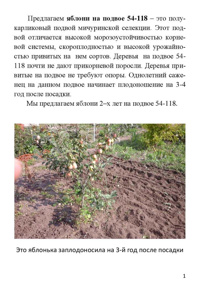 Яблоня лобо: описание сорта, посадка, выращивание и уход