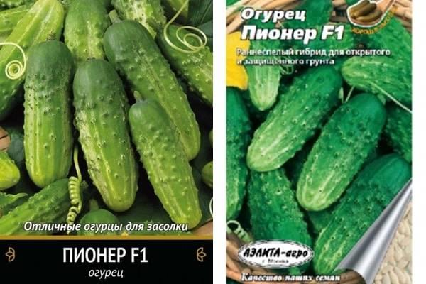Огурец муму f1: отзывы и фотографии, описание сорта, преимущества и недостатки