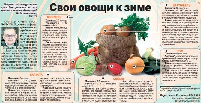 Как сохранить овощи всю зиму свежими