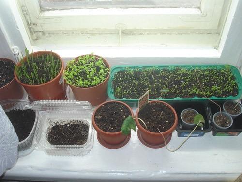 Как правильно выращивать рукколу дома и на даче: посадка и тонкости ухода
