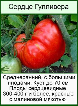 """Томат """"гулливер"""": отзывы фото урожайность"""
