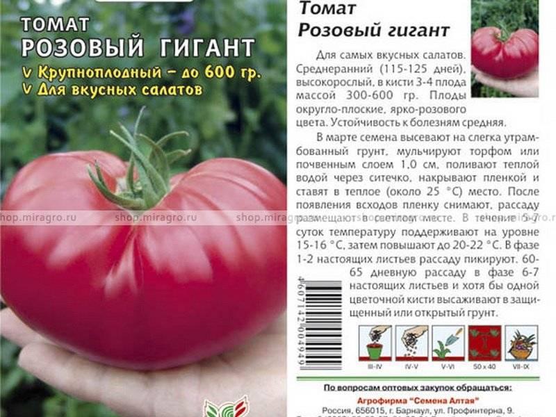 Характеристика и описание сорта томата мамонт, его урожайность - всё про сады
