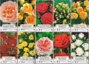 Лучшие сорта роз остина в 2021 году