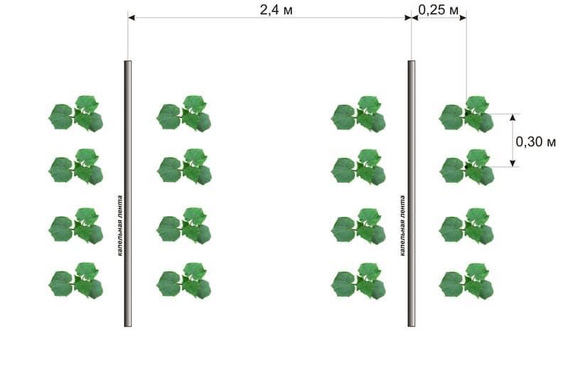 Посадка огурцов в открытый грунт: как правильно сеять семенами, на какую глубину