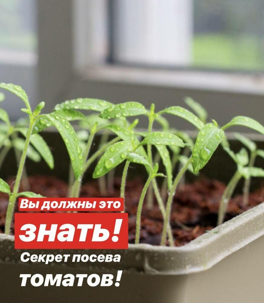 Как сажать помидоры - 115 фото лучших способов выращивания помидоров в разных условиях