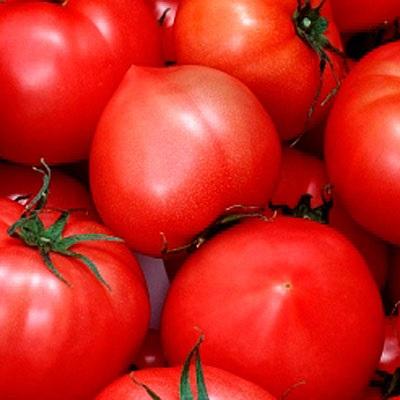 """Томат """"хали-гали f1"""" описание сорта, особенности выращивания, отзывы и фото"""