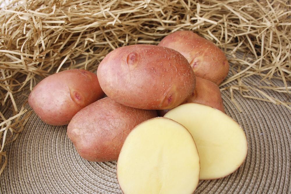 Картофель журавушка характеристика   вырасти сад!