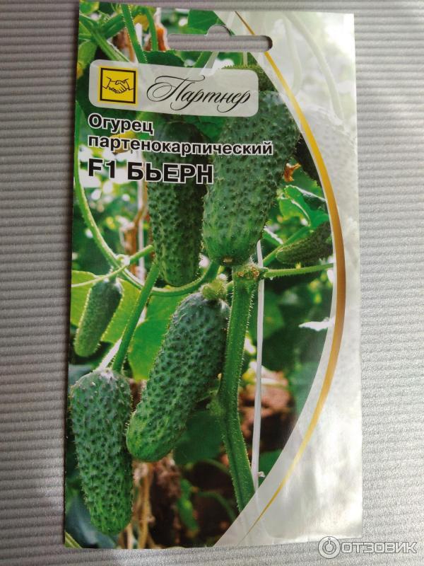 Огурец бьерн f1: описание, отзывы, урожайность