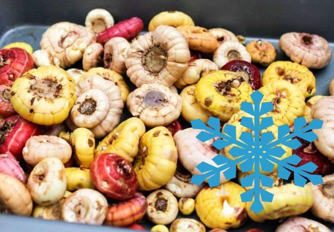 Гладиолусы: посадка и уход, можно ли сажать в открытом грунте осенью, под зиму, когда сажать