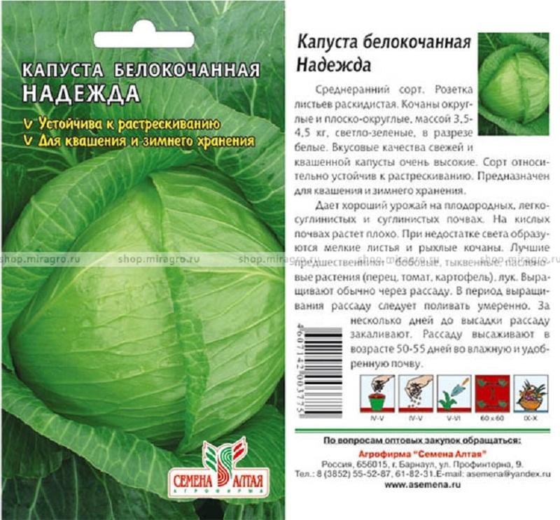 Выращивание капусты в открытом грунте — подробное описание по уходу и посадке кочанов капусты (видео + 105 фото)