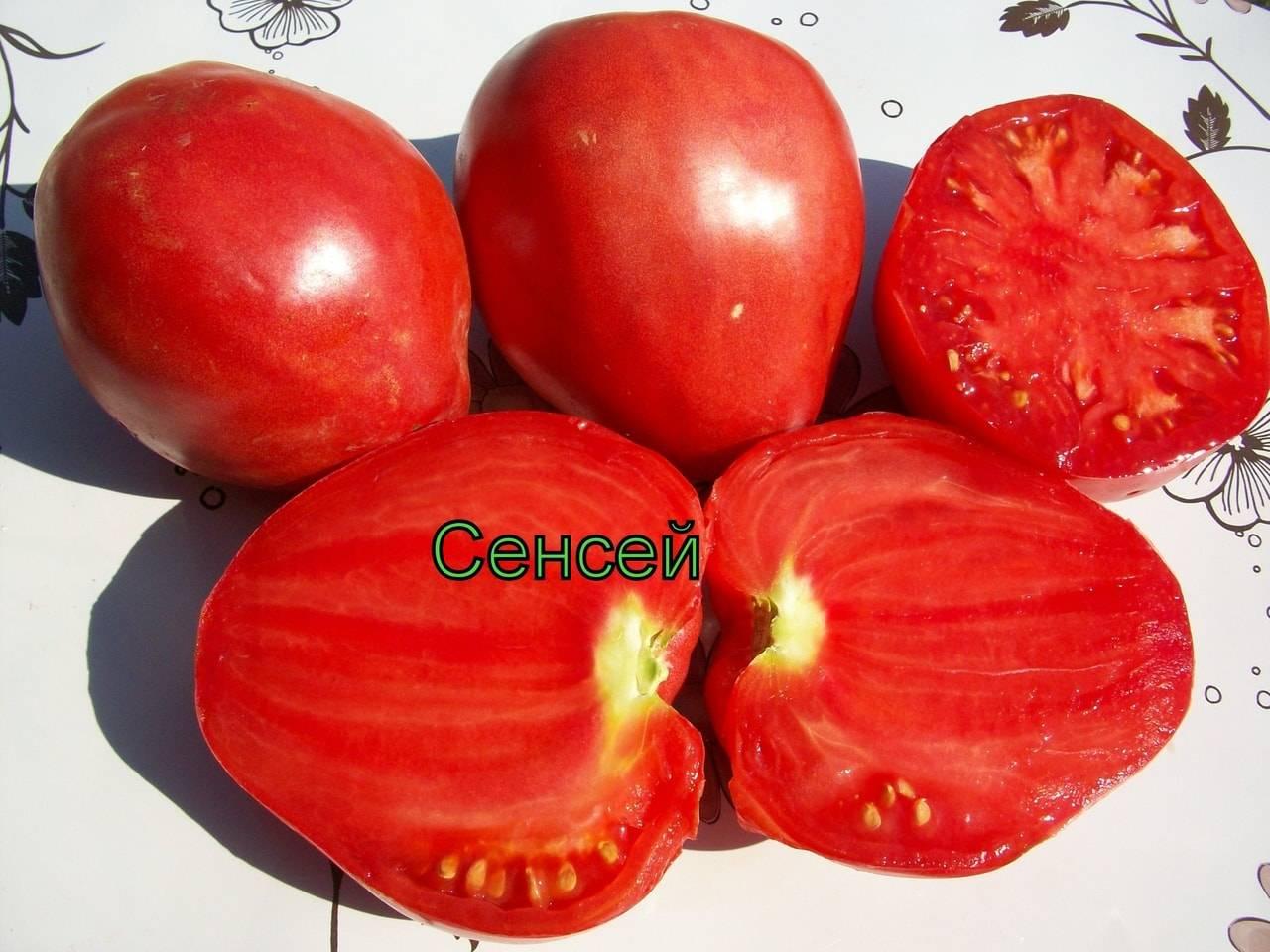 """Томат """"сенсей"""": описание помидоров и характеристика сорта, фото, урожайность куста"""