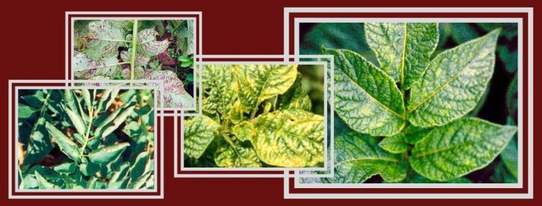 Болезни растений: мозаика. методы защиты и профилактики садов и огородов