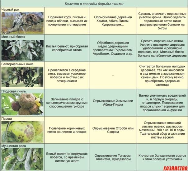 Обработка яблони весной от болезней и вредителей: профилактика лучше лечения