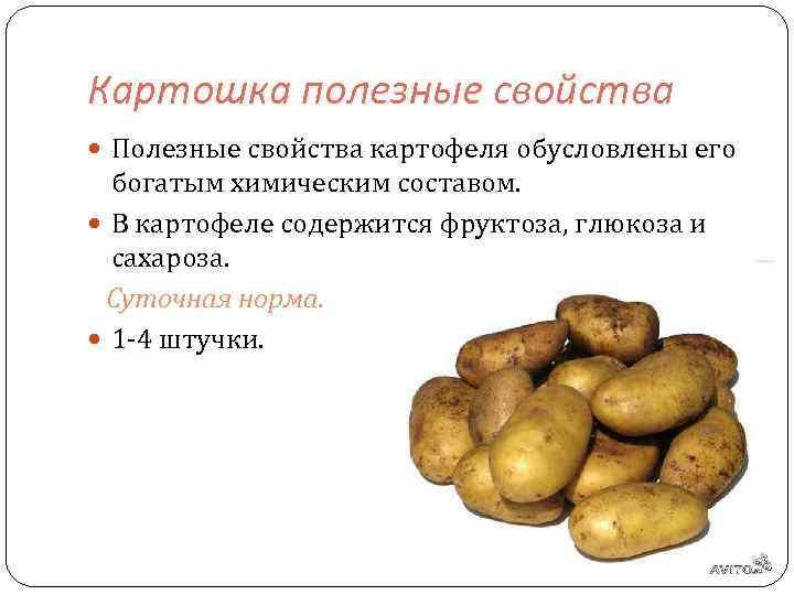 Картофель: польза и вред для здоровья и организма человека, противопоказания к употреблению, свойства синего и фиолетового сортов, а также ценность крахмала русский фермер
