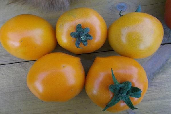 Лучшие и урожайные сорта томатов: описание с фото