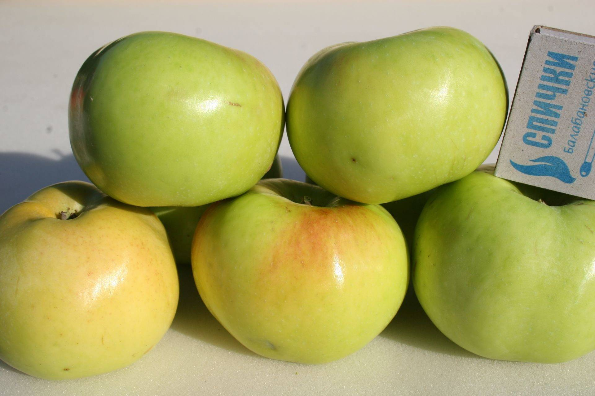 Яблоня сорта имрус – описание сорта