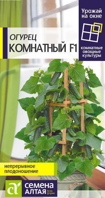 Выращивание огурцов на балконе в домашних условиях