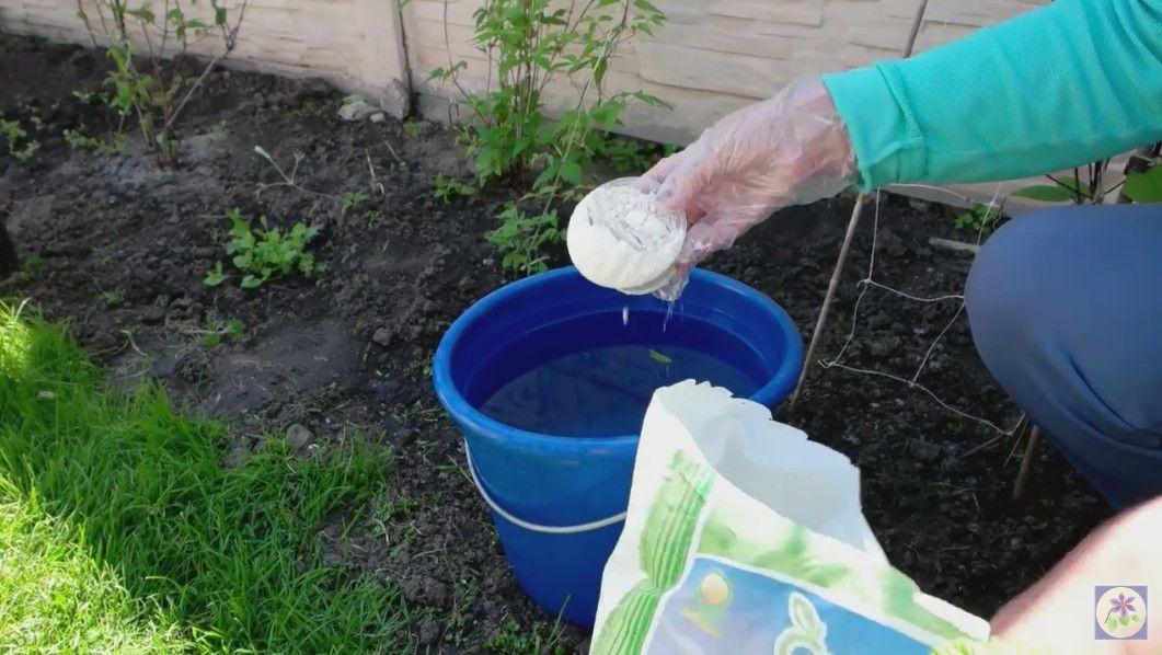 Техника полива капусты в открытом грунте