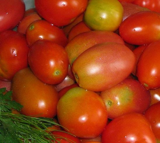 Описание лучших сортов помидоров для засолки и консервирования