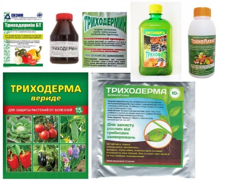 Перечень лучших фунгицидов для лечения земляники и клубники