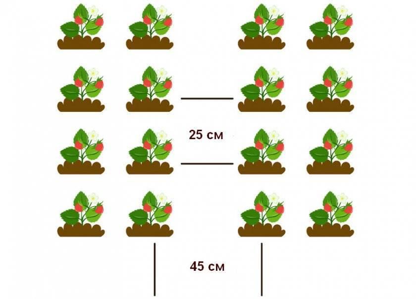 Клубника эльсанта - рекомендации по выбору посадочного материала и характеристика сорта (75 фото)