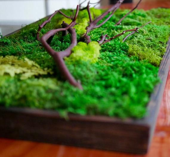 Ландшафтный дизайн и оформление мхами – идеи и советы | сайт о саде, даче и комнатных растениях.