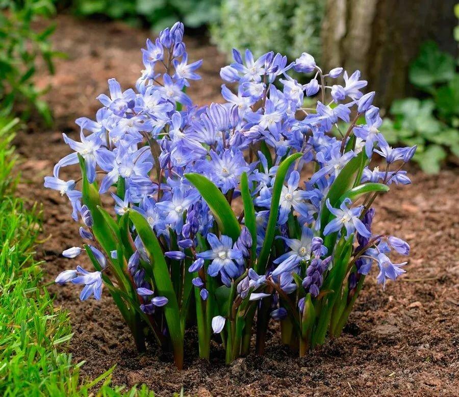 Цветы весной: правильная посадка и уход